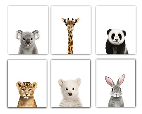 Top 10 best selling list for pictures of big and small animals