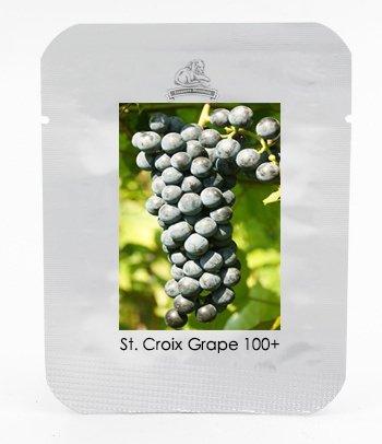 1 Professional Pack, 100 graines / paquet, Sainte-Croix Black Grape Seed Hardy Douce Fruit plantules Plante # NF459