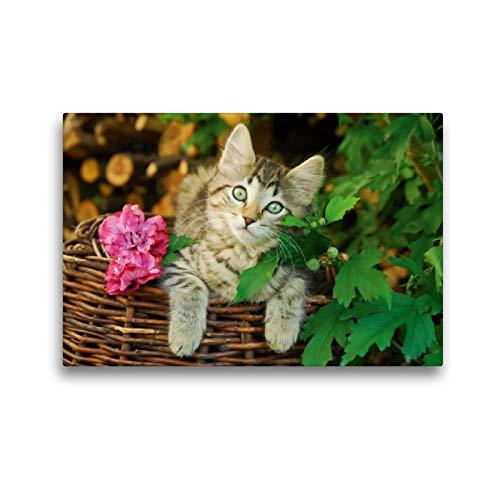 Premium textiel canvas 45 cm x 30 cm dwars, schattig jong katje op een wilgenmand | muurschildering, afbeelding op spieraam, afgewerkt afbeelding op echte wilgenmand (CALVENDO dieren);CALVENDO dieren
