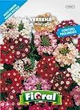 Sementi da fiore di qualità in bustina per uso amatoriale (VERBENA IN MISCUGLIO)