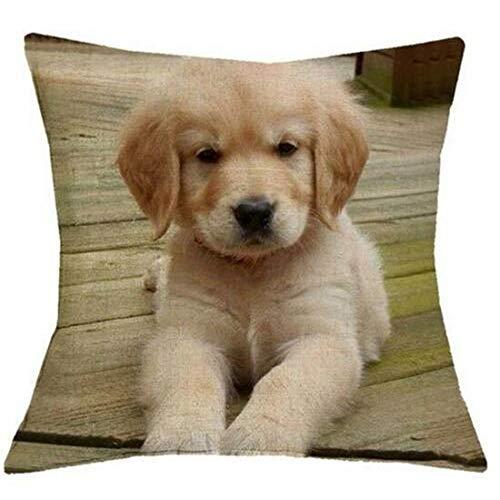 HFBBY Cute pet Golden Fur Animal Pattern Pillow Home Decorative Pillow case (16, 22×22 inch)