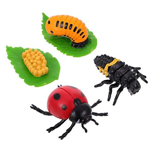 YARNOW 4 Pièces Animaux Figurine Cycle Vie Ensemble du Cycle de Vie d'une Coccinelle Kit Enfants d'apprentissage Enseignement Cycle de Croissance des Insectes Modèle Jouet Préscolaire