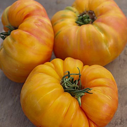 Ananas Bio-Tomatensamen für ca. 10 Pflanzen - beliebte Fleischtomate, tolles Aroma