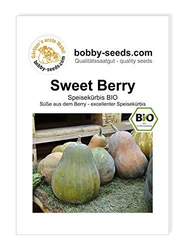 Sweet Berry - Sucrine de Berry BIO Kürbissamen von Bobby-Seeds Portion