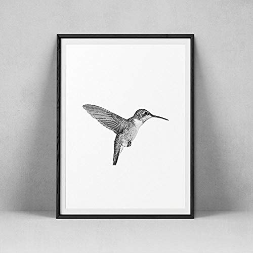 JRLDMD Minimalista colibrí Lienzo Pintura Moderno Minimalista pájaro impresión Cartel Arte de la Pared Estilo nórdico hogar Sala de Estar decoración Mural 50x70cmx1 sin Marco