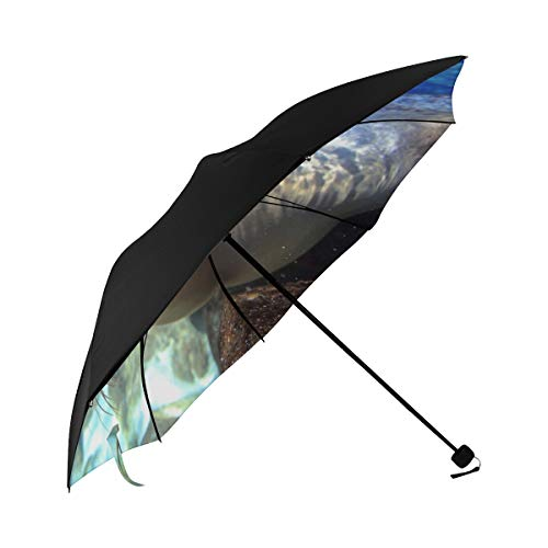 Sun Table Umbrella Cute Sea Lion In Water Underside Printing Best Foldable Umbrella Folding Compact Umbrella With 95 Uv Protection For Women Men Lady Girl