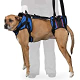 Walkin' Lift Full Support Dog Harness for Large Dogs 70+ lbs | Lift Support Harness Helps Dogs with Arthritis, Senior Dogs and Pets Recovering from Surgery