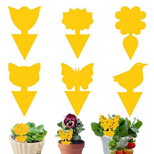 Vallen Fruitvliegjes Vallen LLMZ 60 stks Plant Fly Catcher Insect Fly Paper Sticky Traps voor Indoor en Outdoor Plant…