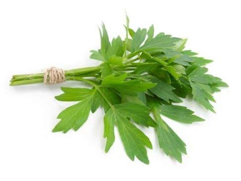 Livèche frais 100 graines Levisticum officinale herbe grandir ez