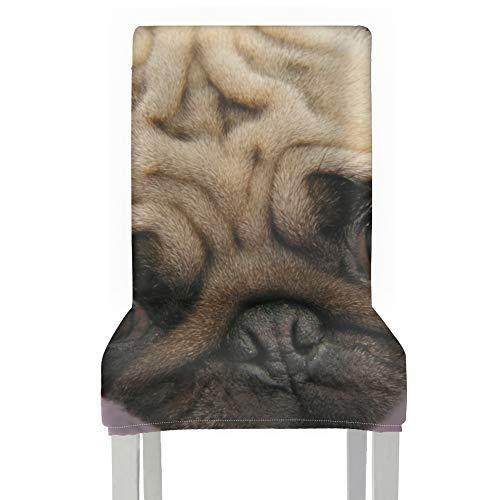 AQQA - Coprisedili per sedie con motivo carlino e cagnolino, con occhi lavabili, in poliestere, elasticizzati, rimovibili, lavabili per casa, cucina, feste, ristoranti e matrimoni