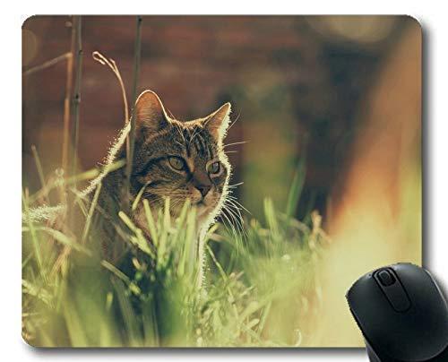 Gaming-Mauspad, Mauspad für Haustiere, Mauspad für Computer cat202