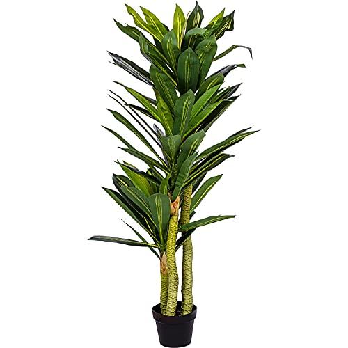 Plantasia -  ® Drachenbaum,
