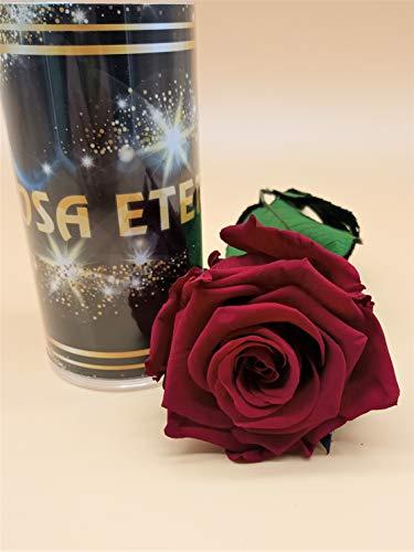Rosa preservada eterna roja Premiun. Gratis TU ENVÍO. Rosa preservada roja Premiun....