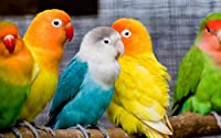カラフルな鳥500ピースジグソーパズル 木製ジグソー脳チャレンジ