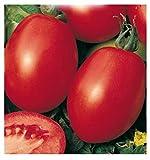 Semillas de tomate rio grande - lycopersicum esculenthum - semillas agrícolas - tomates - alrededor de 280 semillas
