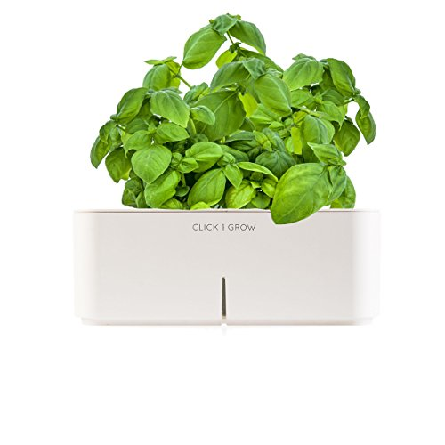 Click&Grow Starter Kit basilico - Pianta di basilico