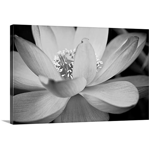 Hardy Gallery Floral Artwork Flower Painting Picture: Calla-Lily Print on Canvas Set for Wall