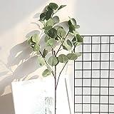 Momola Branches d'eucalyptus séchées Naturelles pour Arrangement Floral, Mariage, décoration d'intérieur (Vert)