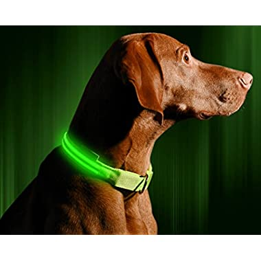 """Illumiseen LED Dog Collar - USB Rechargeable - Available in 6 Colors & 6 Sizes - Makes Your Dog Visible, Safe & Seen - Green, Large (19 – 24""""/49 – 61cm)"""