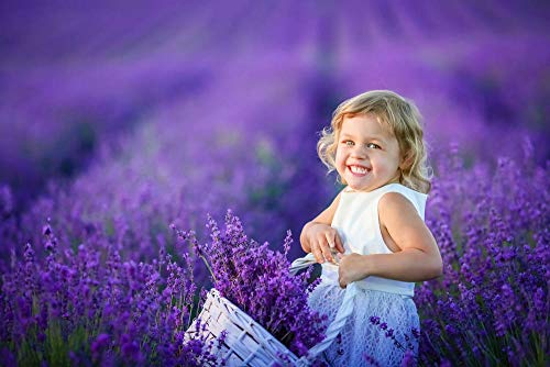 English Lavender Seeds Vera Herb Flower Seeds(50g=50000) Seeds of Planting Outdoor(Lavandula angustifolia Mill)