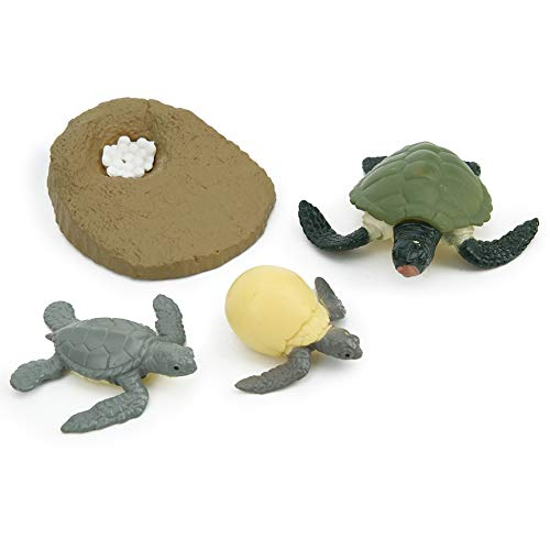 Modelo de ciclo de vida animal, altamente simulación Modelo de ciclo de vida animal Ciclo de vida de juguete Ciclo de vida de tortuga pollito Juguete educativo de aprendizaje(Tortoise Life Cyc