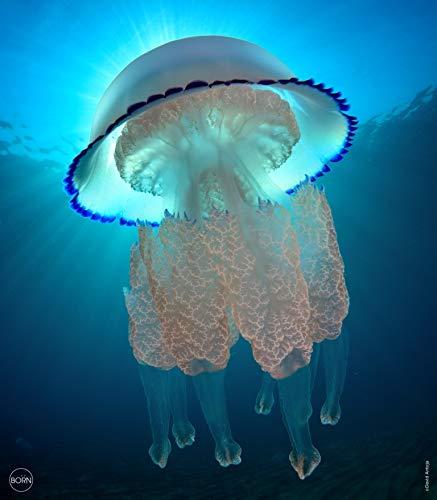 TEXTIL TARRAGO Fouta Estampado Gigante Impresion Digital fotografica 4D 210x240 cm 100% Algodon Medusa