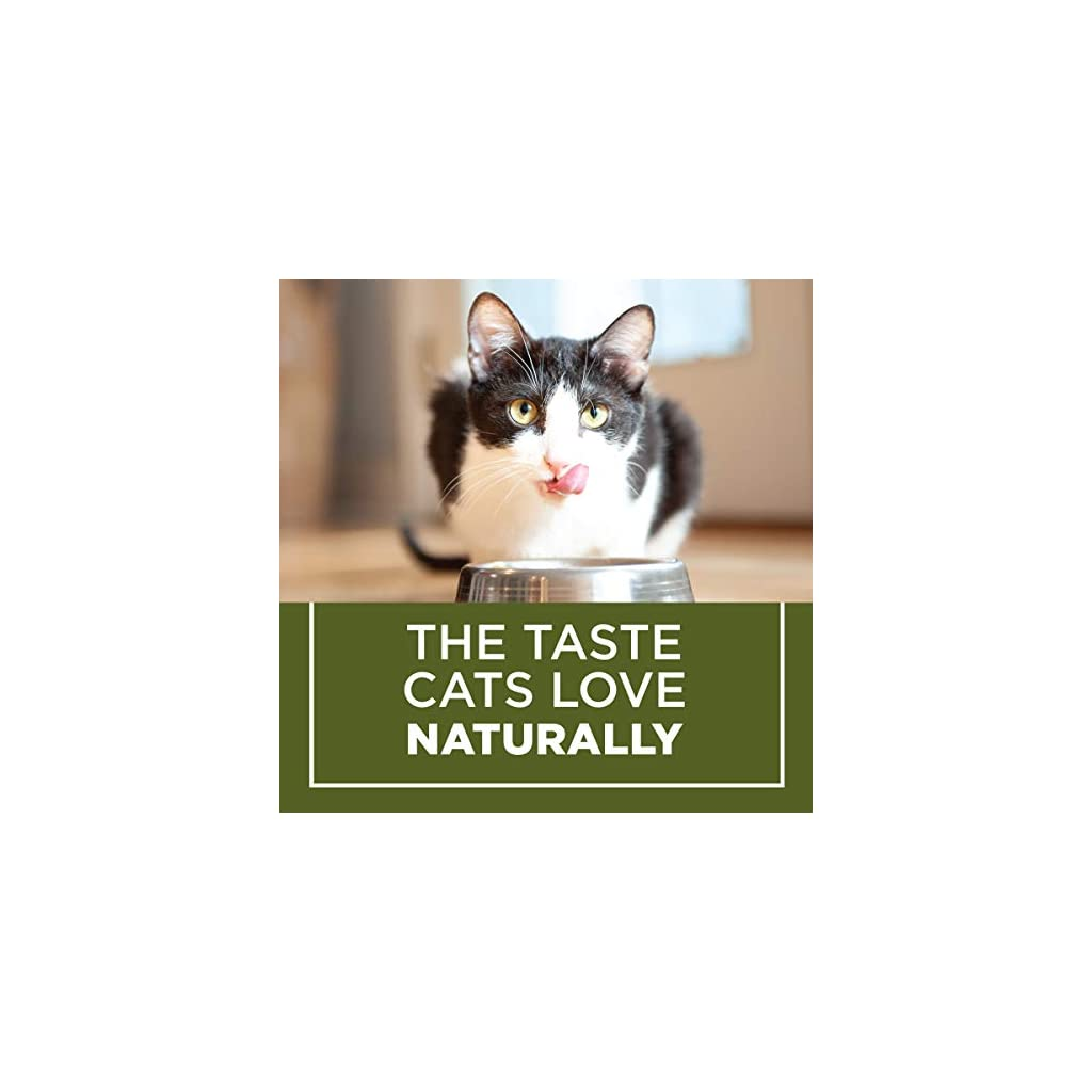 Cat food for your Cat or Kitten