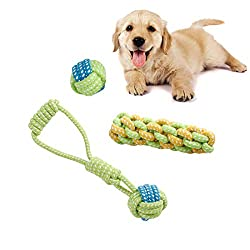 Golden Retriever puppy with 3 piece rope toy set.