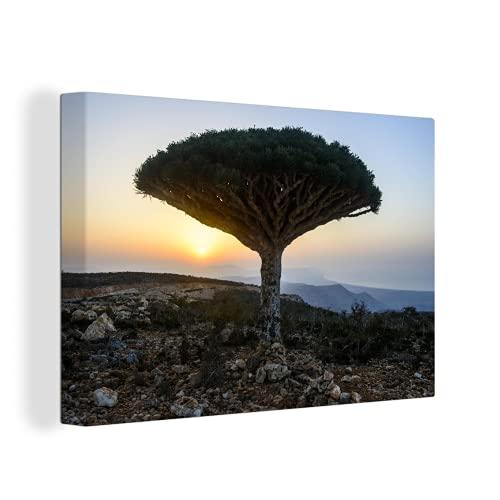 drakenbloedboom ikea