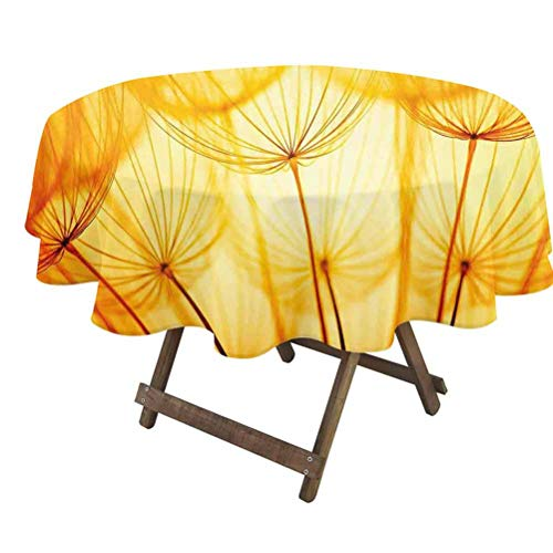Yellow Fitted Table Cover Joy of Dandelion Flower with Garden Seeds in Hot Summer Time Themed Artwork for Family Dinners, Special Occasions, Picnics & Everyday Use Merigold and White   60' Round