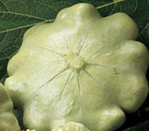 Kürbis Custard White Speisekürbis Ufo Kürbis Samen
