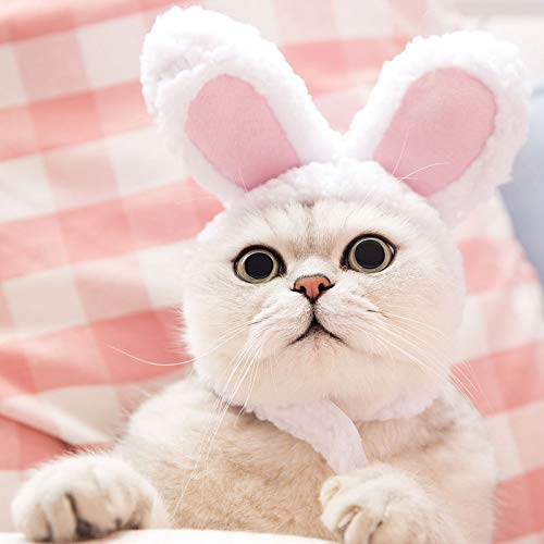 Deguisement pour chat : oreilles de lapin