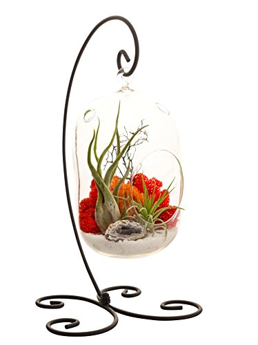 Glass terrarium with air hole