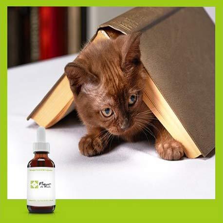 Bachblüten Katze, stressfrei, ohne Alkohol – eine Mischung, die Ihre Katze beim...