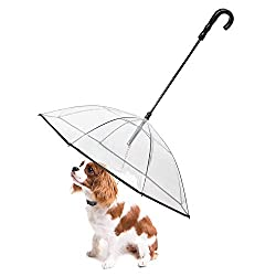 chihuahua with an umbrella