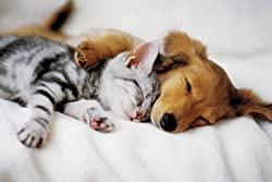 Puppy Dog sleeping With Kitten - art poster