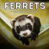 Ferrets Calendar 2022: 16-Month Calendar, Cute Gift Idea For Ferret Lovers Women & Men