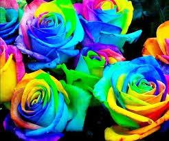 von DUBU 450 Stück 9 Pack Jeder Farbe 50 Samen) chinesischen Rose-Samen - Regenbogen-Rosa-Schwarz Weiß Rot Violett Grün Blau Rosen-Samen