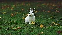 新しいJSCTWCLジグソーパズル大人のための1000個-ウサギ-エンターテインメント木製パズルおもちゃ