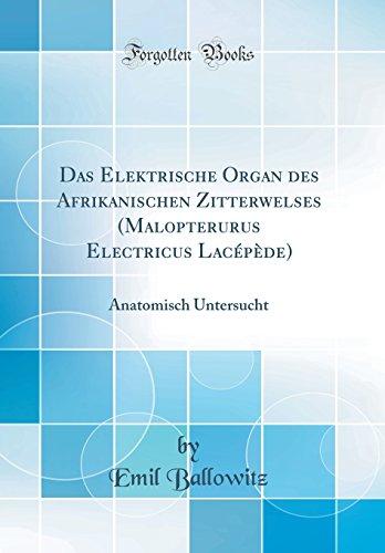 Das Elektrische Organ des Afrikanischen Zitterwelses (Malopterurus Electricus Lacépède): Anatomisch Untersucht (Classic Reprint)