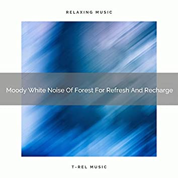 Moody White Noise Of Forest For Refresh And Recharge