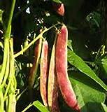 vegherb 30 semi di fagioli rossi! grande degustazione e facile da coltivare