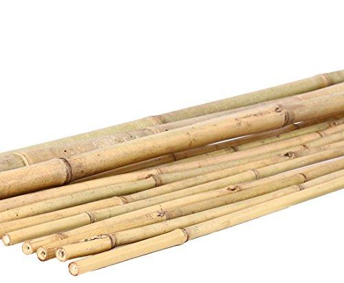 1 Stück Tonkin Bambusstange 200cm Natur Durch. 1,6 bis 1,8cm - Bambusrohre Rohr aus Bambus