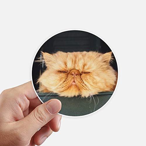 DIYthinker Funny Animal Chat Jaune Tirez Autocollants 10CM Mur Valise pour Ordinateur Portable Motobike Decal 8Pcs diamètre 10cm Multicolor