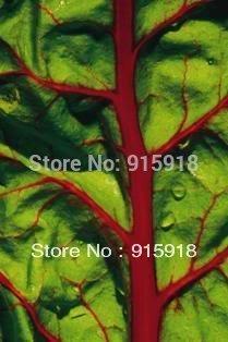 300 RUBY RED SWISS CHARD (Perpetual épinards) Beta Vulgaris cicla Vegetable Seeds