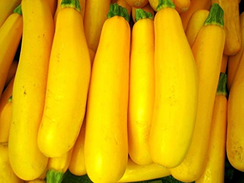 Go Green Squash, Zucchini Yellow Long Seeds (Pack of 30 seeds)