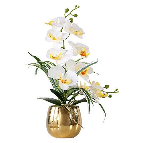 Flores Naturales A Domicilio En Maceta flores naturales a domicilio  Marca ENCOFT