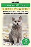Britisch Kurzhaar Katze: Britisch Kurzhaar Katze Ratgeber - BKH Katze - Erziehung, Ernährung und Pflege