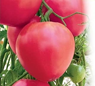bull's heart tomato