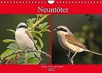 Neuntoeter - Kleiner Vogel, ganz gross! (Wandkalender 2022 DIN A4 quer): Der kleine, wunderhuebsche Vogel, benoetigt dringend unsere Hilfe! (Monatskalender, 14 Seiten )